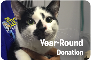 yearround-donation